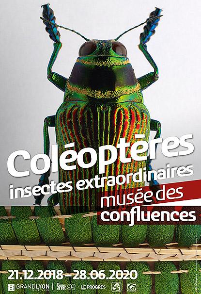 COLÉOPTÈRES : INSECTES EXTRAORDINAIRES